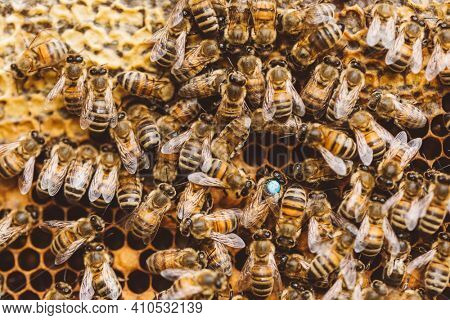 Honey bees and queen bee on honeycomb work together in hive