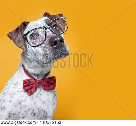 cute studio photo of a shelter dog in a costume on a isolated background