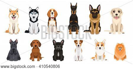 Cartoon Dogs Breeds Set. Collection Of Vector Illustrations Isolated On White Background. Flat Desig