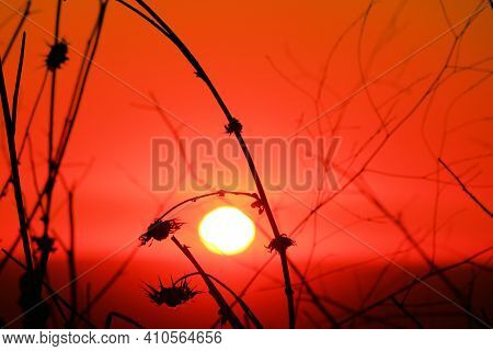 Sun Setting Beyond Plants On A Field Taken At A Grassy Plain In The Rural Countryside