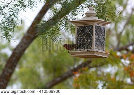 A Bird Perches On A White Lantern Style Birdhouse Filled With Birdseed