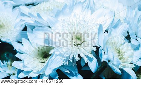 Background With A Bouquet Of Daisies, Close Up Of Large White Daisies