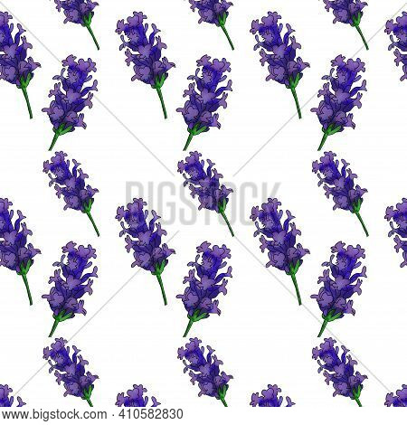 Lavender Branch Beautiful Spring Pattern, Lavender Isolated On White Background