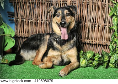 Black And Brown Happy Pooch Dog