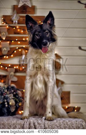 Portrait Of A Beautiful White With Black Happy Pooch Dog