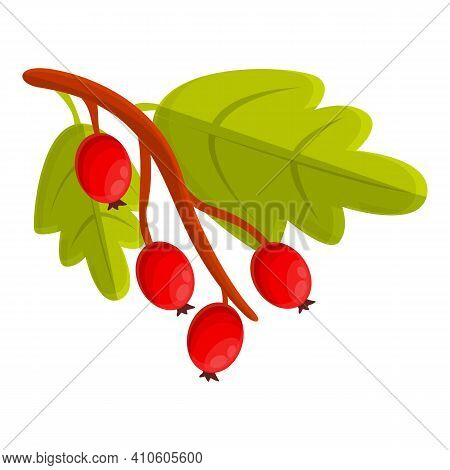 Branch Hawthorn Icon. Cartoon Of Branch Hawthorn Vector Icon For Web Design Isolated On White Backgr