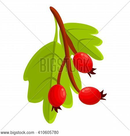 Fresh Hawthorn Icon. Cartoon Of Fresh Hawthorn Vector Icon For Web Design Isolated On White Backgrou