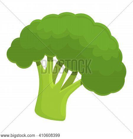 Fresh Broccoli Icon. Cartoon Of Fresh Broccoli Vector Icon For Web Design Isolated On White Backgrou