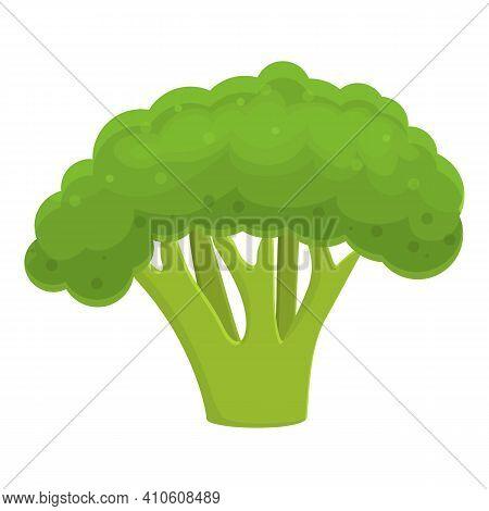 Market Broccoli Icon. Cartoon Of Market Broccoli Vector Icon For Web Design Isolated On White Backgr