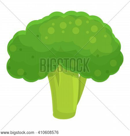Raw Broccoli Icon. Cartoon Of Raw Broccoli Vector Icon For Web Design Isolated On White Background