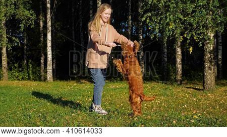 Schoolgirl With Long Fair Hair Plays With Russian Spaniel Puppy On Green Meadow Against Birch Trees
