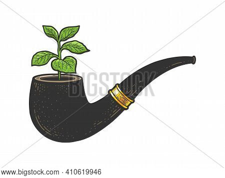 Tobacco Sprout Plant From Smoking Pipe Color Sketch Engraving Vector Illustration. T-shirt Apparel P