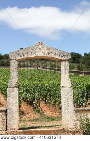 Chassagne-Montrachet, France - July 5, 2020: Chevalier-Montrachet vineyard. Chevalier-Montrachet is a Grand Cru vineyard for white wine from chardonnay in the Cote de Beaune subregion of Burgundy