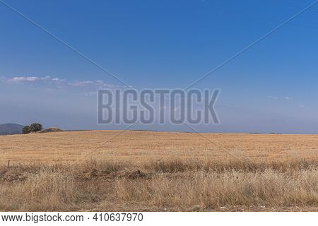Freshly Picked Dry Cereal Field In The Background, In Southern Andalusia Spain.