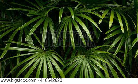 Bright Juicy Exotic Tropical Greens In The Jungle Forest Equatorial Climate. Background With Unusual