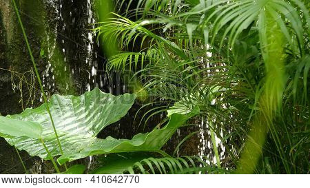 Splashing Water In Rainforest. Jungle Tropical Exotic Background With Stream And Wild Juicy Green Le