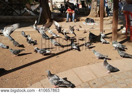 Flock Of Pigeons On The City Street On A Summer Day. Wild Pigeons On The Public Square.