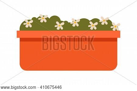 Little Chamomiles In The Flowerpot. Houseplant For Interior Decor Of Home Or Office Vector Illustrat