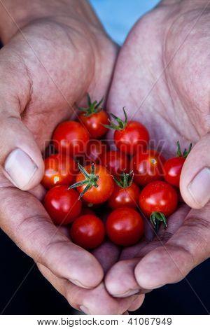 Handful full of cherry tomatoes