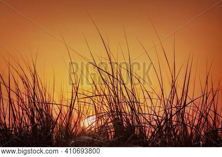 Summer Sunset In The Orange Sky Behind Tall Grass