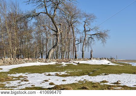 Melting Snow By An Old Dry Stone Wall At Ottenby On The Island Oland In Sweden