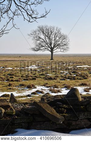 Lone Tree In A Wide Open Pastureland At Ottenby In Sweden