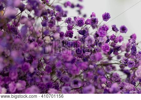 Beautiful Bouquet Of Lilacflowers. Dried Flowers. Lavender Or Verbena.