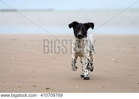 Spotted Female Puppy Running Happily On The Beach On A Cloudy Day