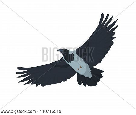 Flying Crow Bird. Grey Crow Icon Isolated On White Background. Vector Illustration.