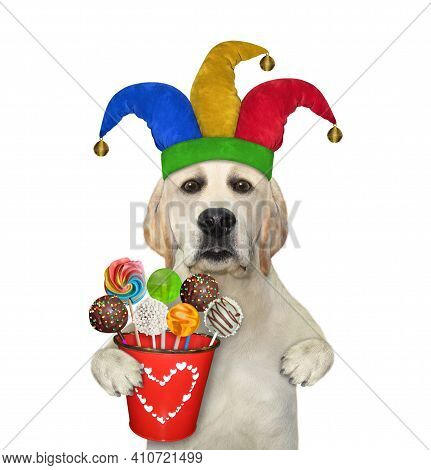 A Dog Labrador Clown In A Jester Hat Is Holding Pail Of Candies. White Background. Isolated.