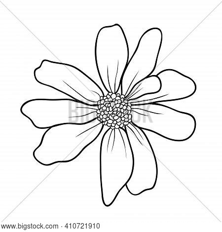 Hand Drawing Buttercup On White Background. Daisy In Sketch Style. Springtime Vector Flower. All Ele