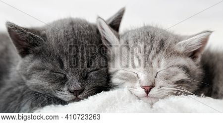 Couple Fluffy Kitten Sleep On Blanket. Little Baby Gray And Tabby Adorable Cat In Love Are Hugging.