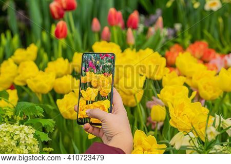 Female Hand With Mobile Phone Making Photo Of Bright Colorful Tulips. Modern Technology. Hello Sprin