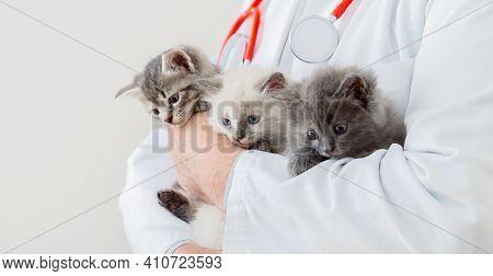 Cats In Vet Doctor Hands. Doctor Veterinarian Examining Many Kittens. Mammal Cats In Veterinary Clin