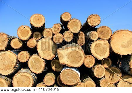 Pile Of Wood After Deforestation. Tree Logs. Dry Chopped Firewood Logs Stacked Up On Top Of Each Oth
