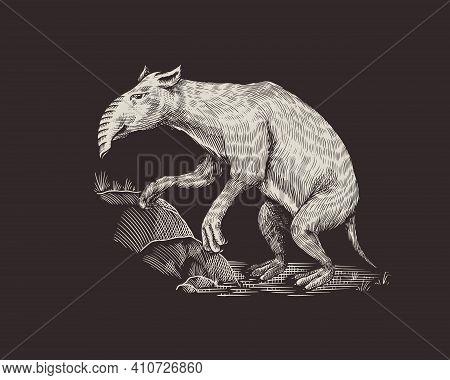 Palorchestes With A Trunk.. Marsupials Of The Family Palorchestidae. Prehistoric Mammals. Extinct An