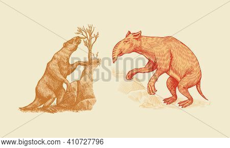 Ground Sloth Or Megatheriidae And Palorchestes With A Trunk. Marsupials Of The Family Palorchestidae