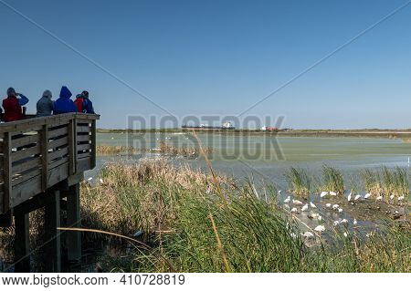 Photographers And Ornithologists Looking At Birds In Wetland At The Port Aransas Nature Preserve, Kn