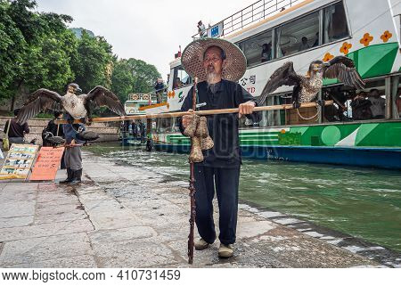 Guilin, China - May 10, 2010: Along Li River. Older Man Displays Cormorant Fishing Birds On A Rod St