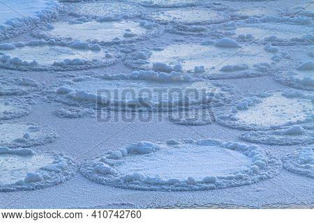 A Severe Frost Turned Individual Round Ice Floes On The Water Into A Solid Ice Sheet. The Thin Young