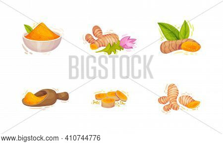Turmeric Plant With Root And Powder Pile In Bowl Vector Set