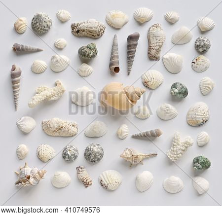 Seashells And Corals Collection On A White Background. Top View