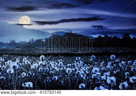 Dandelion Field In Rural Landscape At Night. Beautiful Nature Scenery With Blooming Weeds In Full Mo