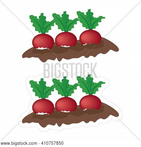 Vector Icon Of A Garden Bed With Growing Radish Or Beetroot, Isolated On White Background. Cartoon E
