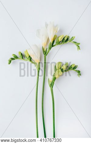 Floral Background. Freesia Flowers On A White Background. Minimal Concept. Flat Lay, Top View.