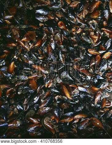 Close-up Of Mussels. Freshly Caught Mussels From The Ocean. Outdoor Seafood Barbecue. Healthy Picnic