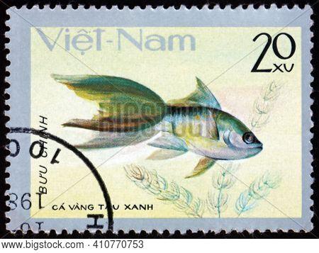 Vietnam - Circa 1977: A Stamp Printed In Vietnam Shows Blue Chinese Goldfish, Carassius Auratus, Fre