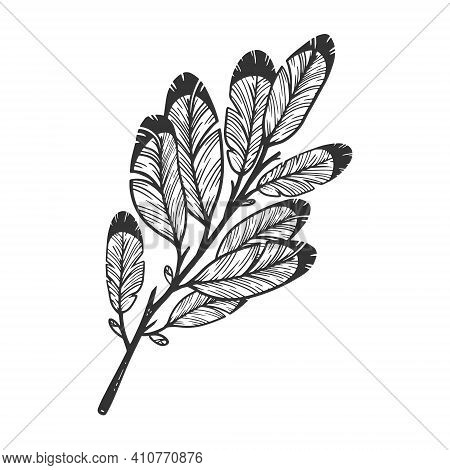Tree Branch With Feathers Instead Of Leaves Sketch Engraving Vector Illustration. T-shirt Apparel Pr