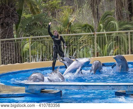 San Bartolome De Tirajana, Gran Canaria, Canary Islands, Spain December 18, 2020: Dolphins Show At P