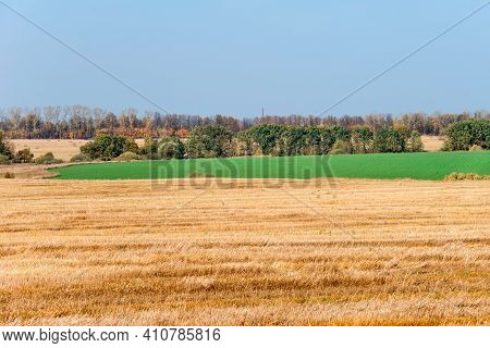Field With Mowed Grass To The Horizon Connects With A Green Field Of Winter Crops, Autumn Day In The